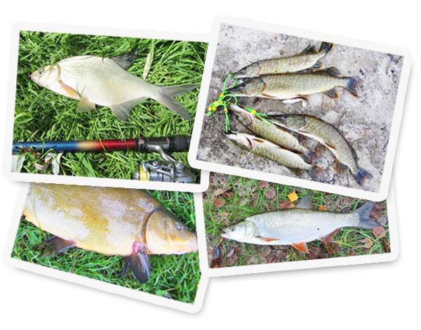 photo-fish1